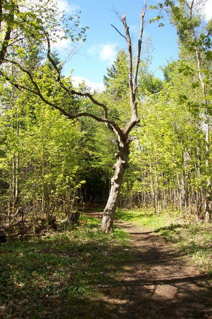 Stony Swamp - trails