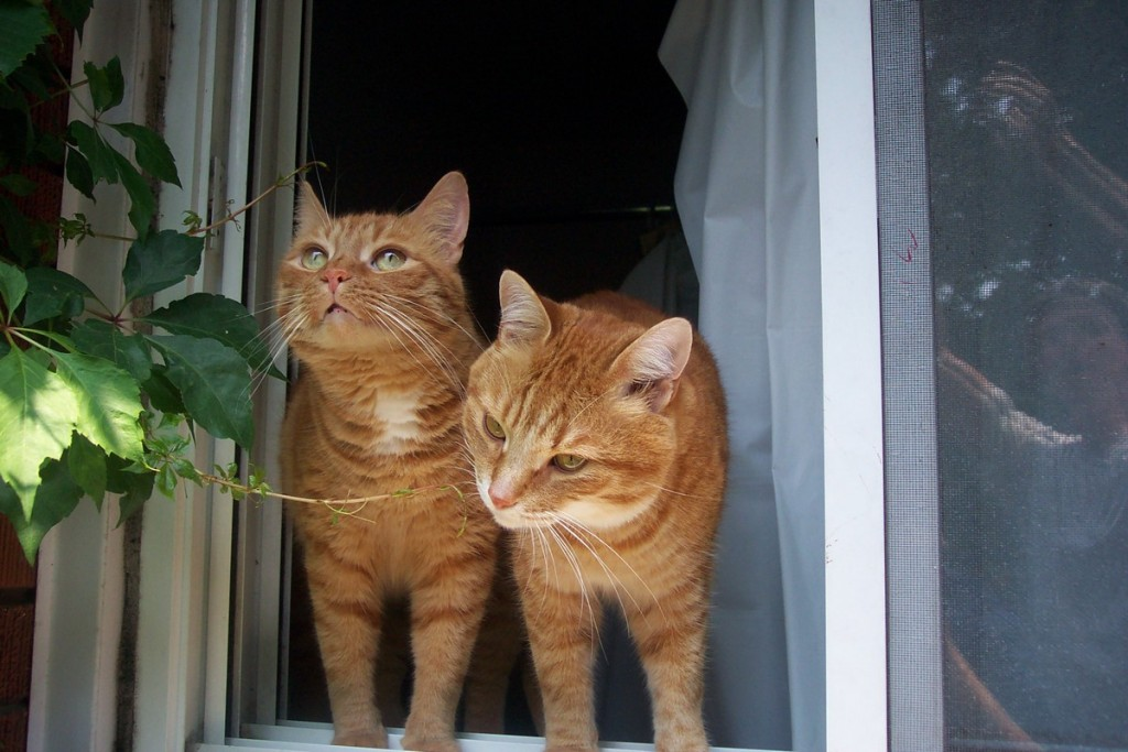 Oswy and Wally. Smellling the freedom of the outside world
