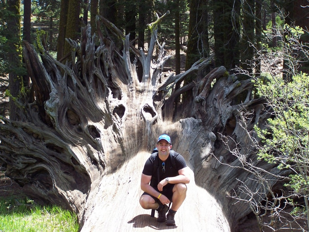 The throne of the forest king (Sequoia National Park)