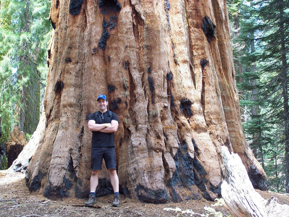 Warning: Standing with the Sequoias will make you feel small