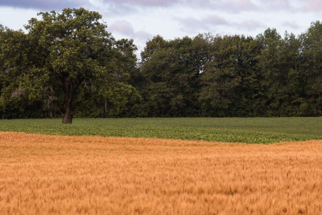 The juxtaposition of colours from these neighbouring fields got me to slow down and then stop to take a photo