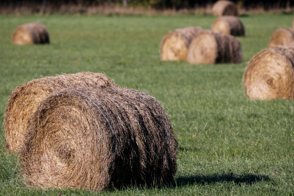 Hay bales are always close by in Ottawa